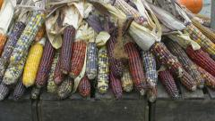 Pile of Indian Corn at market Stock Footage