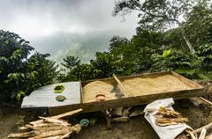 High altitude micro scale commercial coffee plantation - stock photo