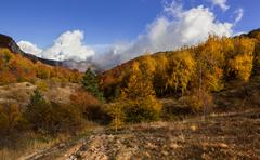 Mixed mountain forest in autumn dress. - stock photo