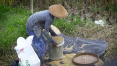 Woman pouring freshly picked rice from a bucket into a bag Stock Footage