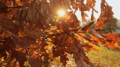 Deciduous forest at autumn Stock Footage