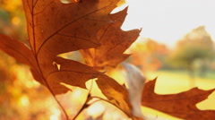 Autumn leaves at wind close up Stock Footage