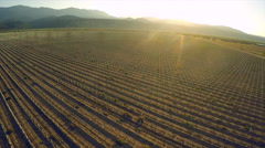 A beautiful aerial over farm fields in California at sunset. Stock Footage
