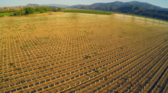 A beautiful aerial over farm fields in California. Stock Footage