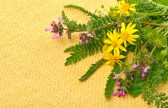 Wildflowers, chamomiles, milfoil on yellow sacking background Stock Photos