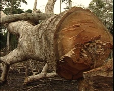 Pan shot of Deforested jungle Stock Footage