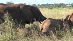 Group of elephants with their babies. Safari in Tanzania Stock Footage