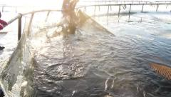 Live trout on the net pen. Stock Footage