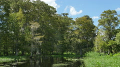 Airboat Ride in Wetland Slowly Going Through Trees, 4K Stock Footage