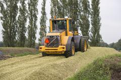 Agriculture shredded corn silage. - stock photo
