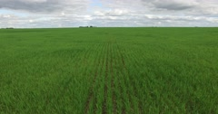 Aerial drone scene monoculture crops in the countryside. Camera moves lateral. Stock Footage