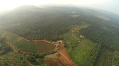 Haze over oil palms plantation - stock footage