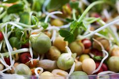 Micro greens salad. - stock photo