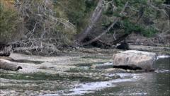Tide coming in along a forested cove Stock Footage