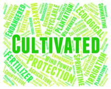 Cultivated Word Indicates Words Cultivation And Text Stock Illustration