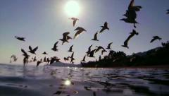 Seagulls flying, Seagulls over the sea in Greece Stock Footage