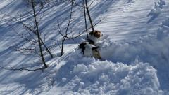 Dog on the Trail of a Wild Animal in a Snowy Forest 4K UltraHD Stock Footage