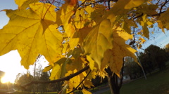 Yellow leaves of autumn at sunset in the park Stock Footage