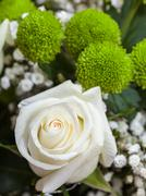 Fresh white rose in bunch of flowers Stock Photos