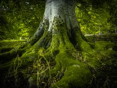Stock Photo of Tree Roots In A Forest