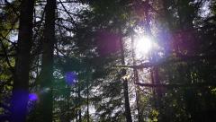 Sun Through Evergreen Trees Stock Footage