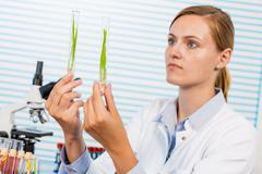 Research of GMO plants in microbiological laboratory - stock photo