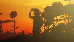 Farmer in sunflower field - stock footage