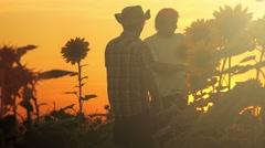 Farmers planning sunflower harvest Stock Footage