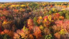 Scenic Aerial of Autumn Colors, Trees, Forests Stock Footage