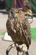 Owl in Balmaseda, Bizkaia, Basque country, Spain Stock Photos