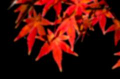 blurred Colorful Autumn Leaf season - stock photo
