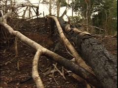 Deforested jungle Stock Footage