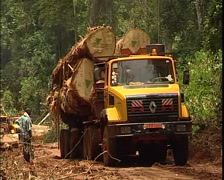 Loading of trees or logs onto trucks in the Cameroon jungle Stock Footage