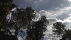 Tree line and Clouds 2 Wide - stock footage