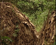 Abandoned village of Pygmies Stock Footage