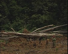 Pygmy childrens and woman walking around the deforestation Stock Footage