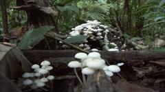 Mushrooms on rainforest floor Stock Footage