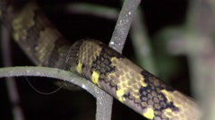 Snake move in tree in the night Stock Footage