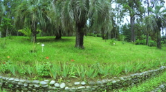 Palm trees in park Stock Footage