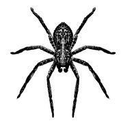 spider, doodle - stock illustration