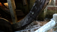 Stock Video Footage of The water wheel is the power source of the old watermill
