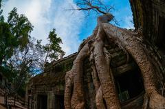 Tree from below fish eye Ta Prohm - stock photo
