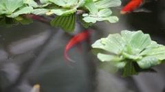 Fish swim among plants Stock Footage