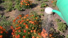 Watering flowers in garden Stock Footage