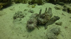 Two Red Sea walkman Stock Footage