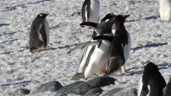 Runing Penguins in the snow - stock footage
