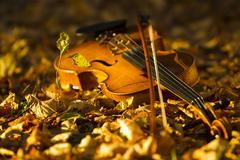Violin lying on the fallen leaves Stock Photos