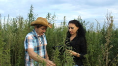 Stock Video Footage of Agronomist and Farmer in Cannabis Marijuana field