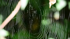 spider web close up - stock footage