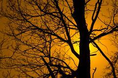tree on a bright sun - stock photo